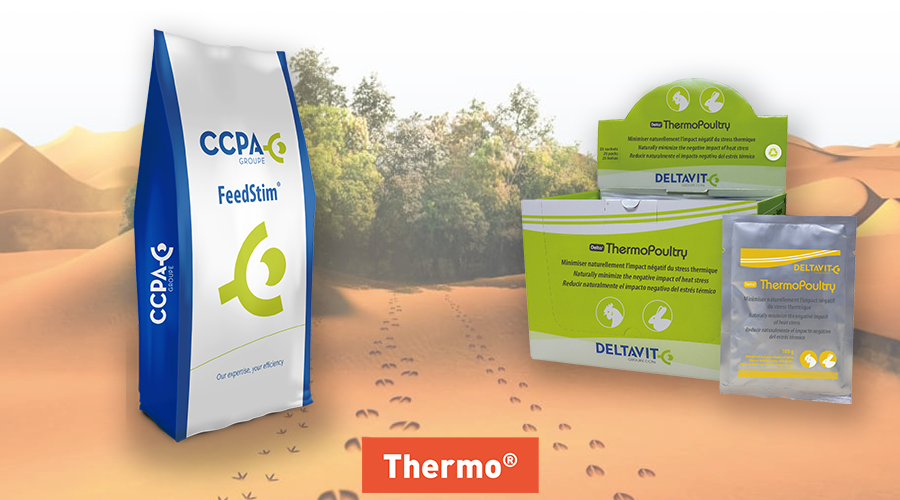 Vignette volaille produits Thermo FeedStim et ThermoPoultry